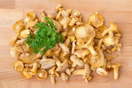 Les champignons source de vitamine d dermatologue for Fish pedicure boston